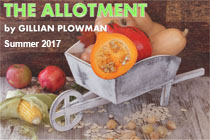 The Allotment by Gillian Plowman